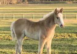 Filly by Blind Sided out of Shiney Metallic Cat
