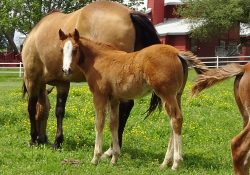 Filly by Blind Sided out of Smart Shiney Annie